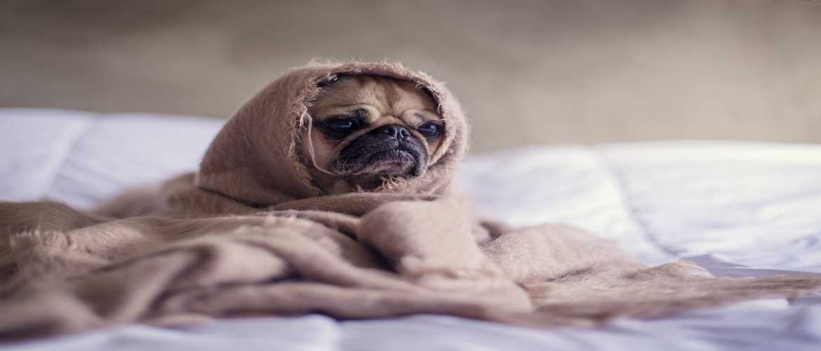 This Winter Give Your Pet A little More Care