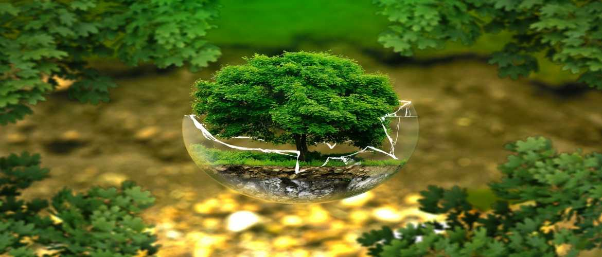 If You Want to Bring Change in Environment, Start Today